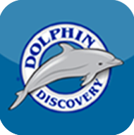 dolphin-discovery